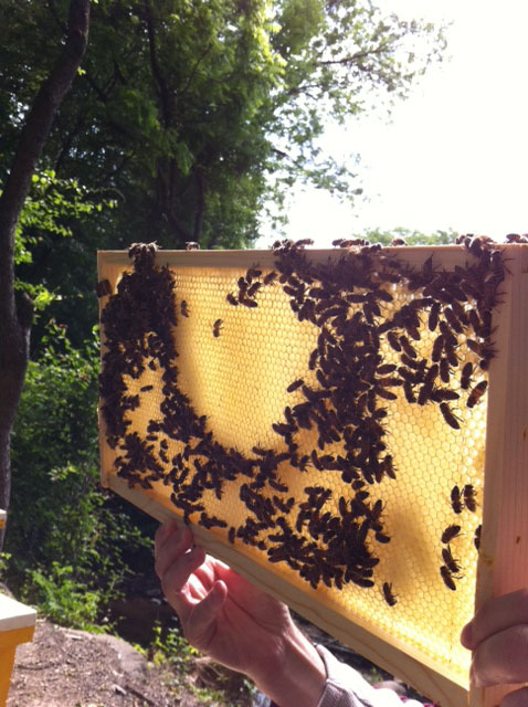 Honey Bees On Honey Comb