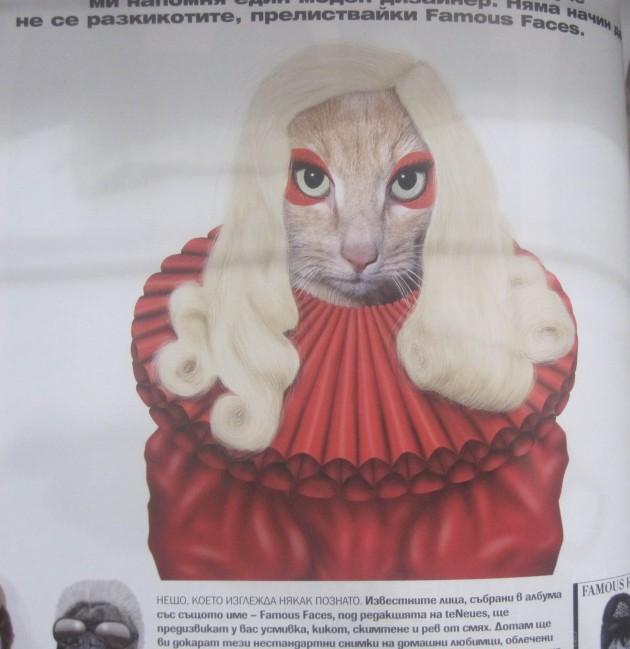 Lady Gaga Cat Dressed Up Like Lady Gaga