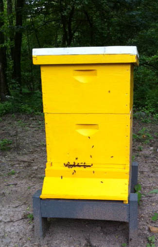 Yellow Honey Bee Hive