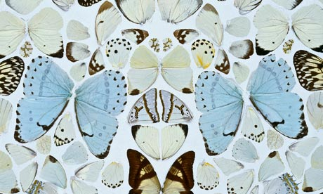 Damien Hirst Butterfly Artwork Absolution