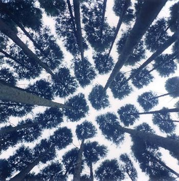 Rinko Kawauchi Trees