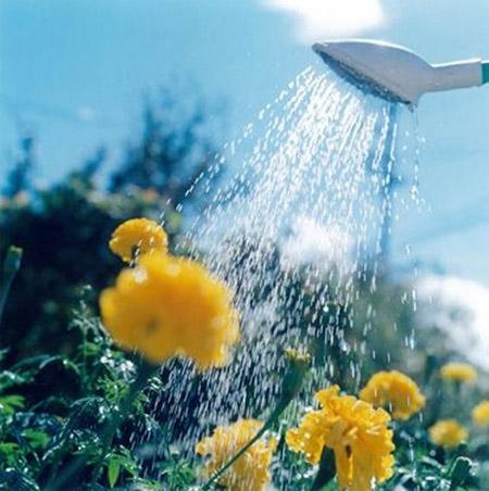 Rinko Kawauchi Watering Flowers