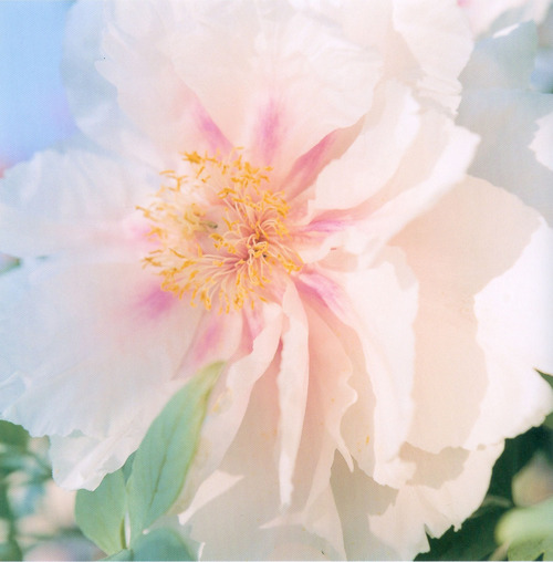 Rinko Kawauchi White Flower
