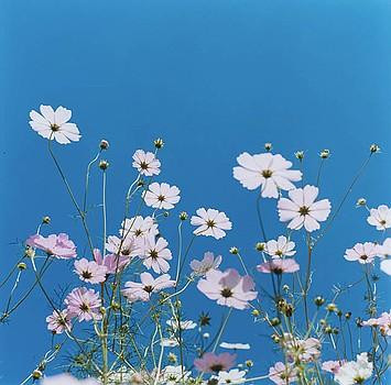 Rinko Kawauchi White Flowers Blue Sky