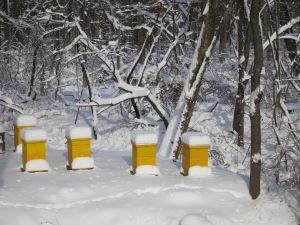 Yellow Bee Hives